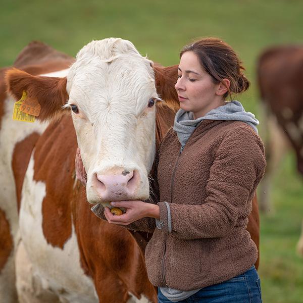 producteur de vache laitière Savoie
